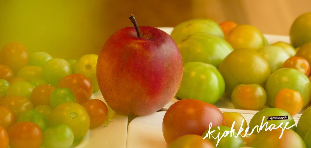 Epler skiller ut et modningshormon (etylengass) som en beskjed til epleblomstene om at nå er sesongen over og dere kan blomstre av. Samme beskjed er det som går fra fruktfatet ditt til blomstene du har satt i vase. Det er derfor du bør ha avstand mellom disse. Etylengassen fra eplene kan også brukes til å modne grønne tomater, men da bør du ha dem lukket miljø f.eks i en plastpose for å holde på gassen.