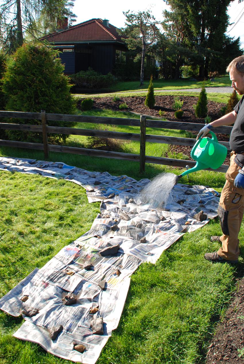 FUKTIGHET Da potetene var på plass og dekket av avispapir, vannet vi til avisene var gjennomvåte.