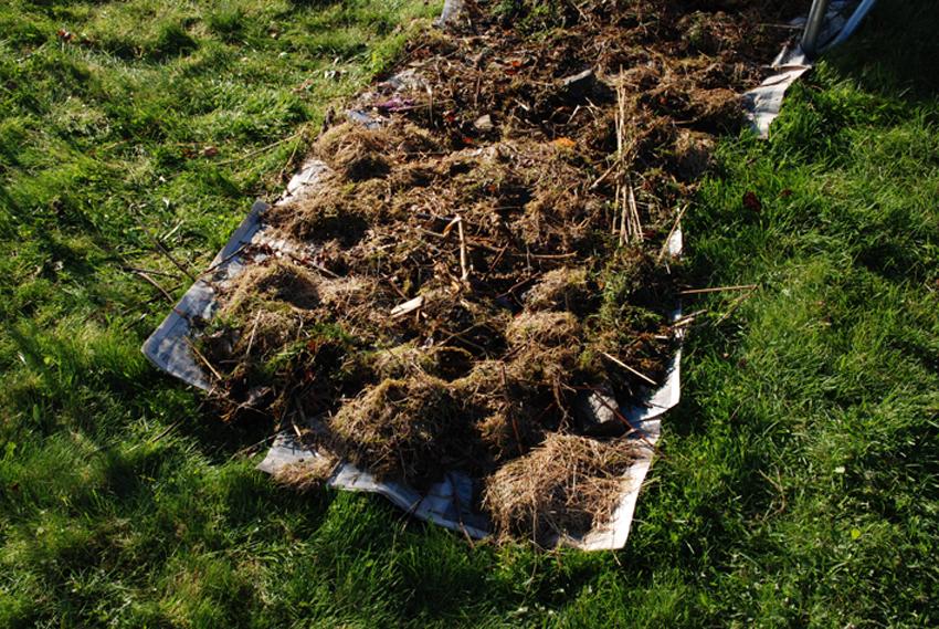 For å holde på fuktigheten dekket vi de fuktige avisene med rask fra hagen.