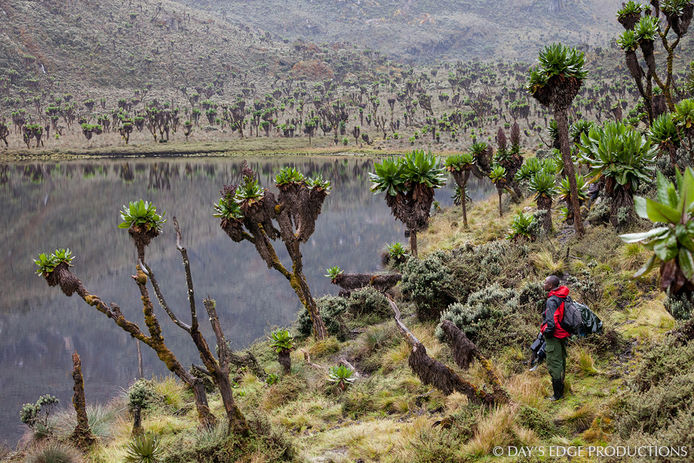 Bakonjo climbing guide Nason Buraru looks over Bujuku Lake in Rwenzori Mountains National Park, Uganda.