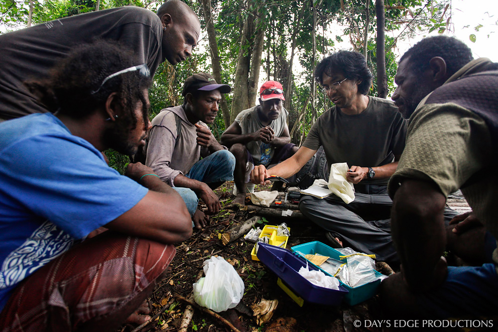 Biologist Dr. Albert Uy teaches his assistants in the Solomon Islands how to capture and band songbirds. Photo taken in Star Harbour, Makira Island, Solomon Islands.