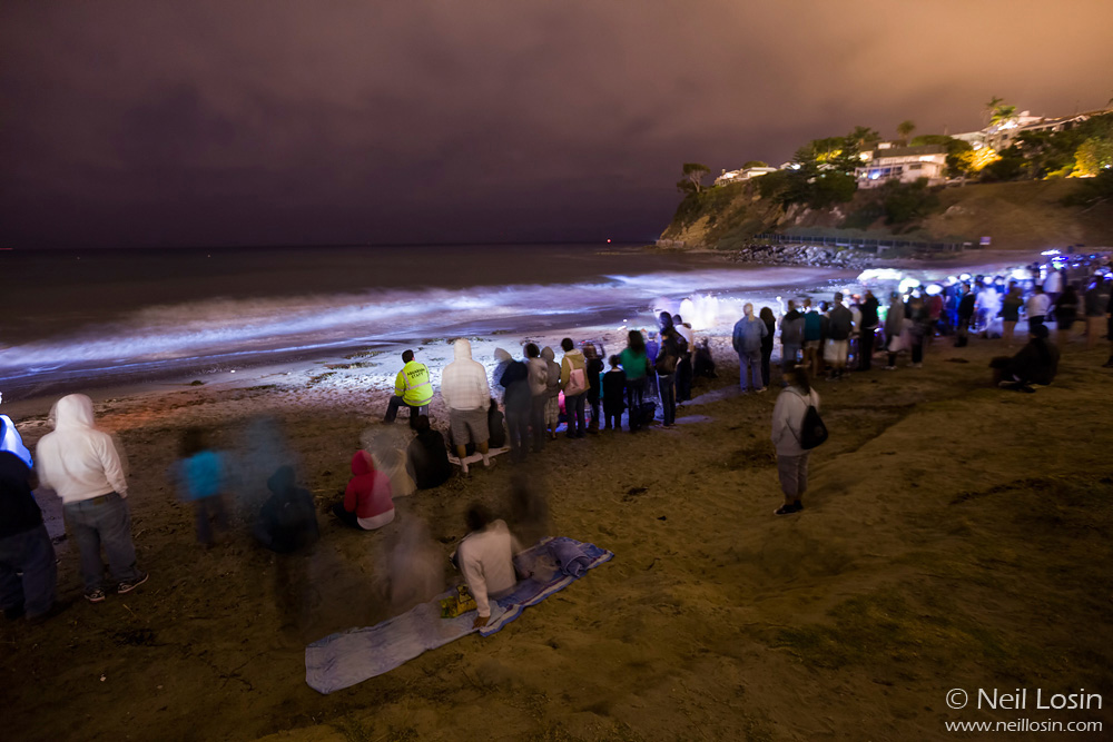 Hundreds of people gather at the Cabrillo Marine Aquarium near Los Angeles to watch the spawning of the California Grunion (Leuresthes tenuis) on the beaches.