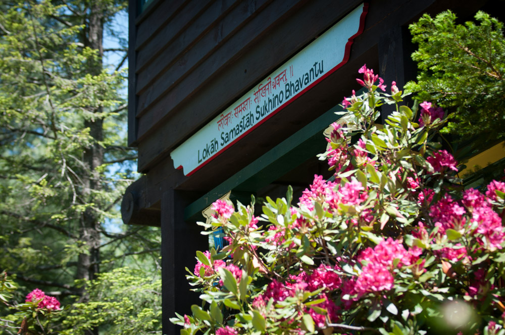 Pink Rhododendrons in front of Woodstock home for  Simple Recipes for Joy  PR Shoot. Photo by Derek Pashupa Goodwin.