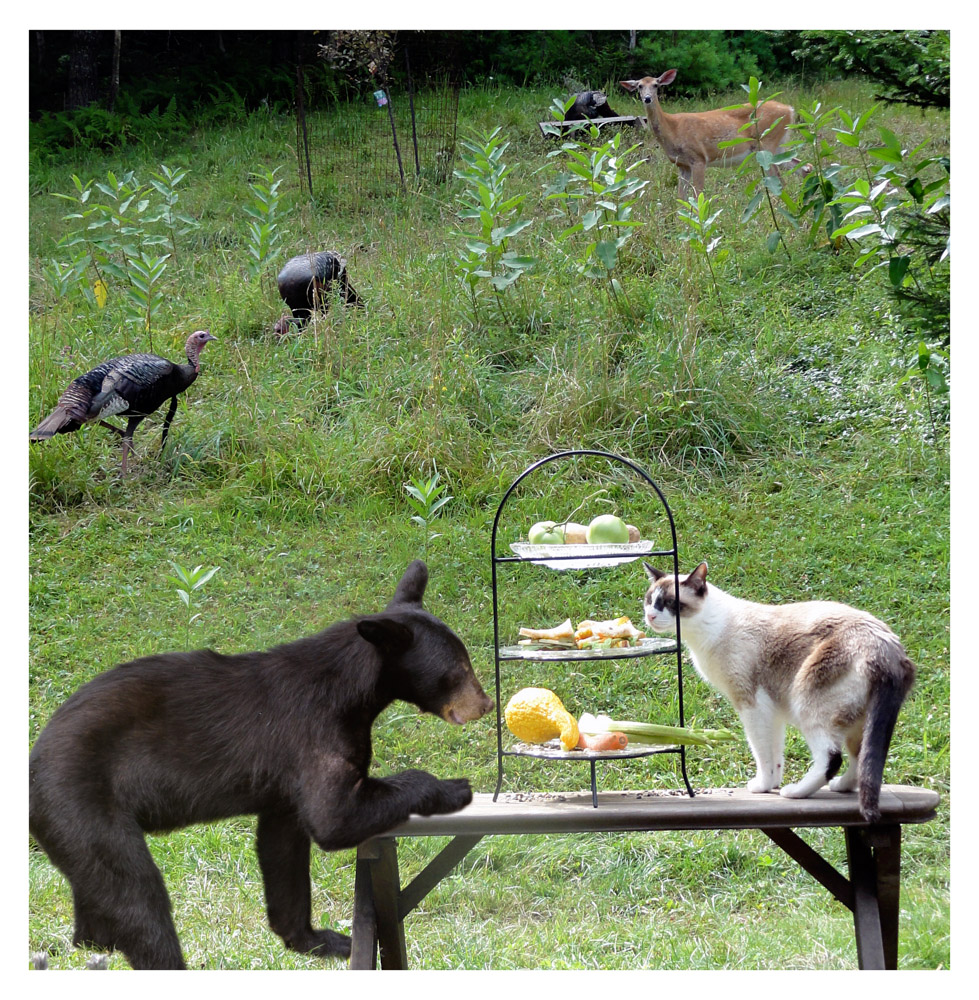 Baby bear, Nicholas the cat, wild turkeys and deer at Wild Woodstock Forest Sanctuary. Photo by Jessica Sjoo