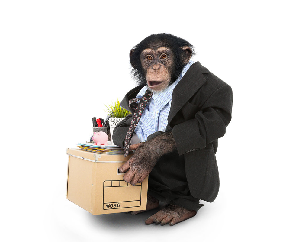 Chimp_Suit_01.jpg