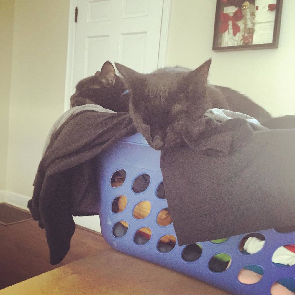 Clean laundry makes the best kitty bed!