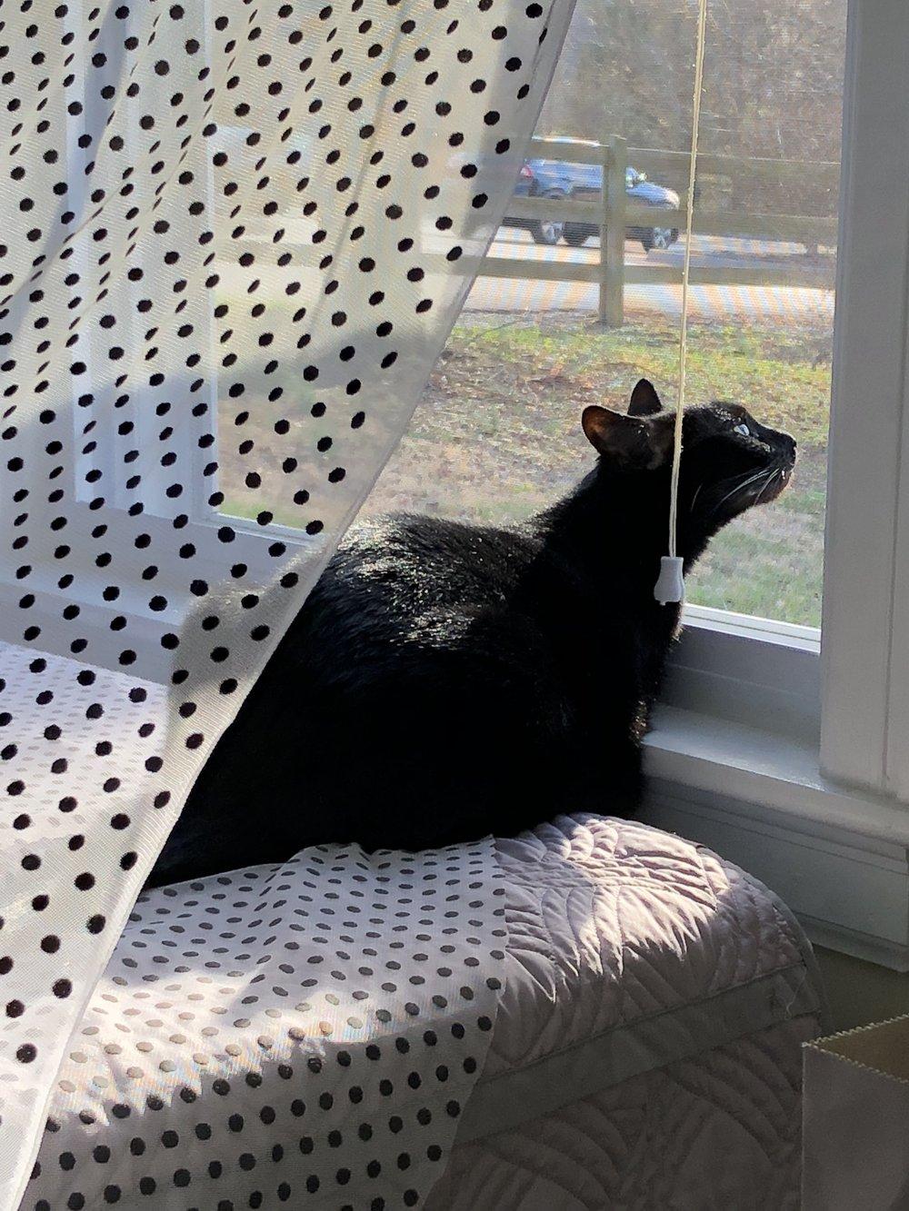 Elvira was enjoying the sunshine and warm breeze too!
