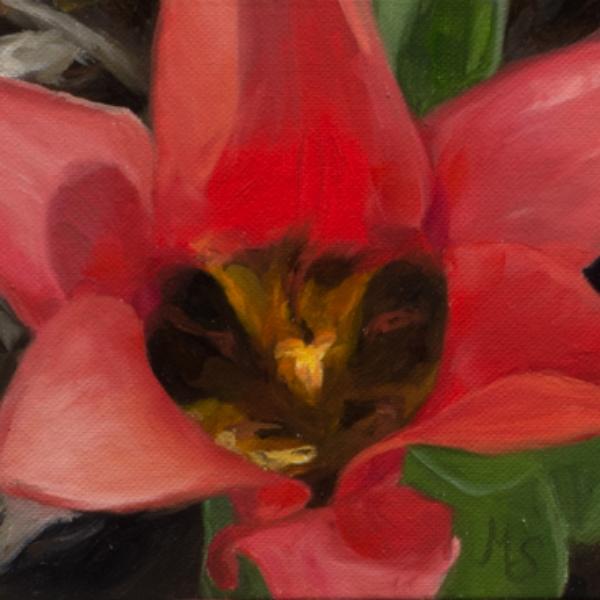 tulipDSC_9865.jpg
