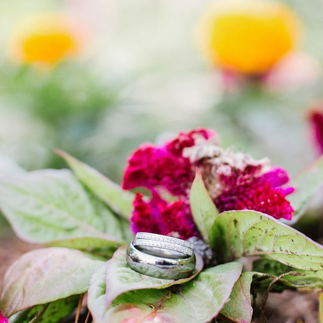 Together forever, never apart. - #weddingrings #weddingphotography #springfieldmo #weddingflowers #sparkevents #sparkyournight #summerlove #summerwedding #417wedding #springfieldwedding