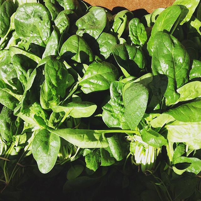 We are open until 6 PM tonight so come stock up on fresh spring spinach, salad mix, purple sprouting broccoli, and more! Don't forget we will be closed March 23 through March 27.