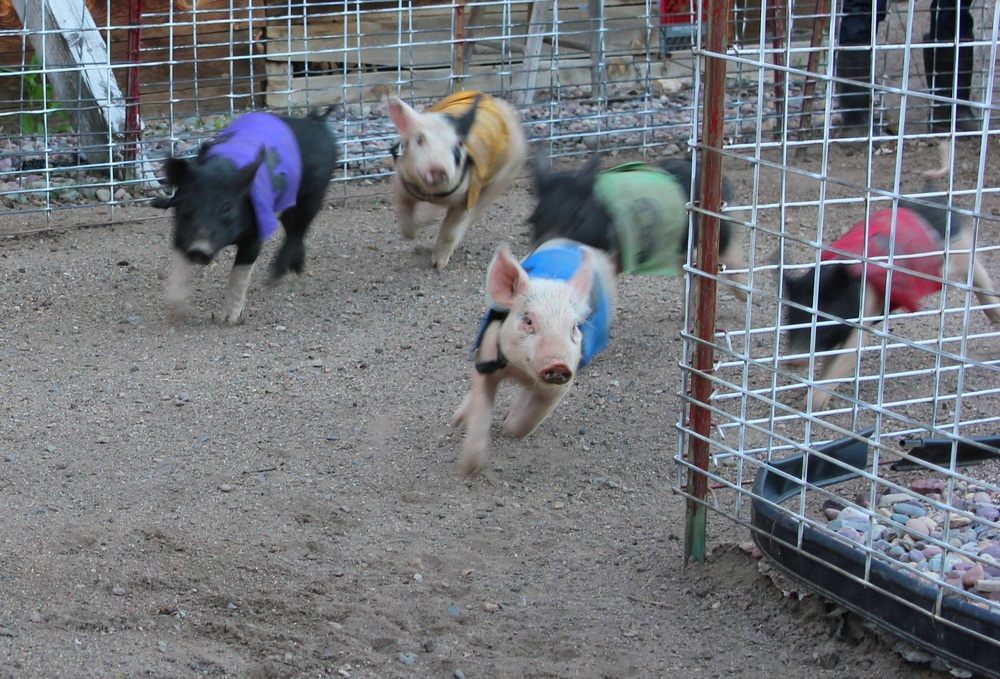 If you've never seen a pig race, Bearcreek is the town to visit! The historic Bear Creek Saloon boasts a beautiful back bar, excellent steaks, a historic setting, and pig races out back every weekend at 7 pm.