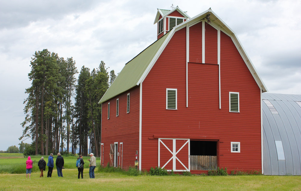 The McClarty barn is a lucky save for descendants and caretakers of this farm. In 1992, Darrell Worm bought the property, and leased the land to a farmer. In 2014, with the barn in very rough shape, MT Fish, Wildlife, & Parks, Flathead Land Trust, and Mr. Worm worked together to add 189 acres of the McClarty Farm to the North Shore Wildlife Management Area with funding from the Bonneville Power Administration. The terms of the sale then allowed Mr. Worm to restore the barn.