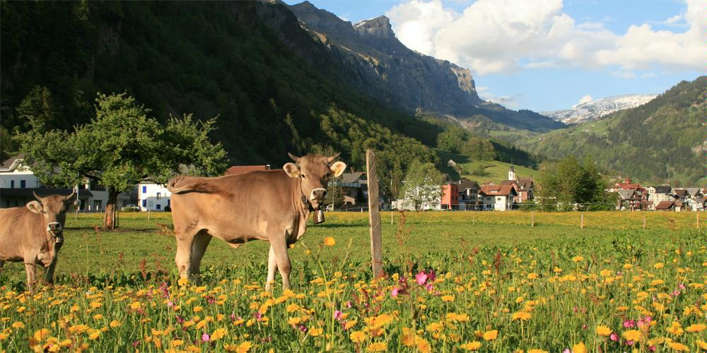 Photo http://www.erlebniswelt-muotathal.ch/de/