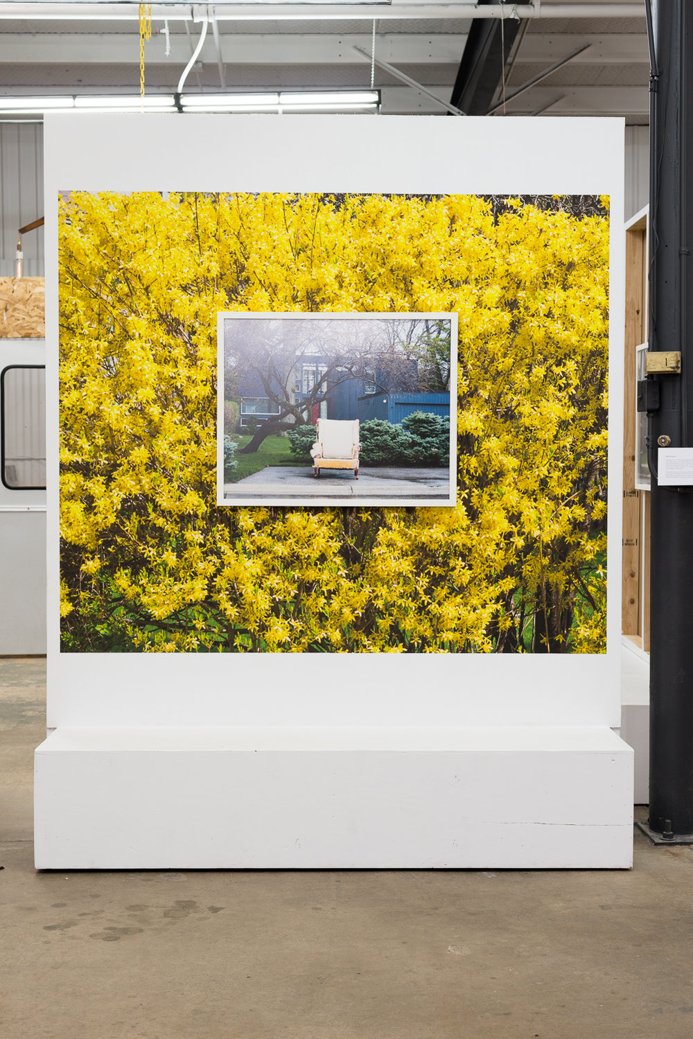 Yellow Chair, 24x30 framed Archival Pigment Print.  Layered over 4ft x 5ft wallpaper detail of Forsythia #2.