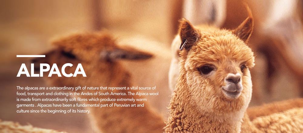 Inkita_Home_Carousel_Alpaca.jpg