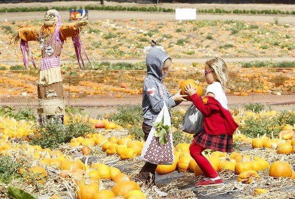 Photo Courtesy of dailypilot.com