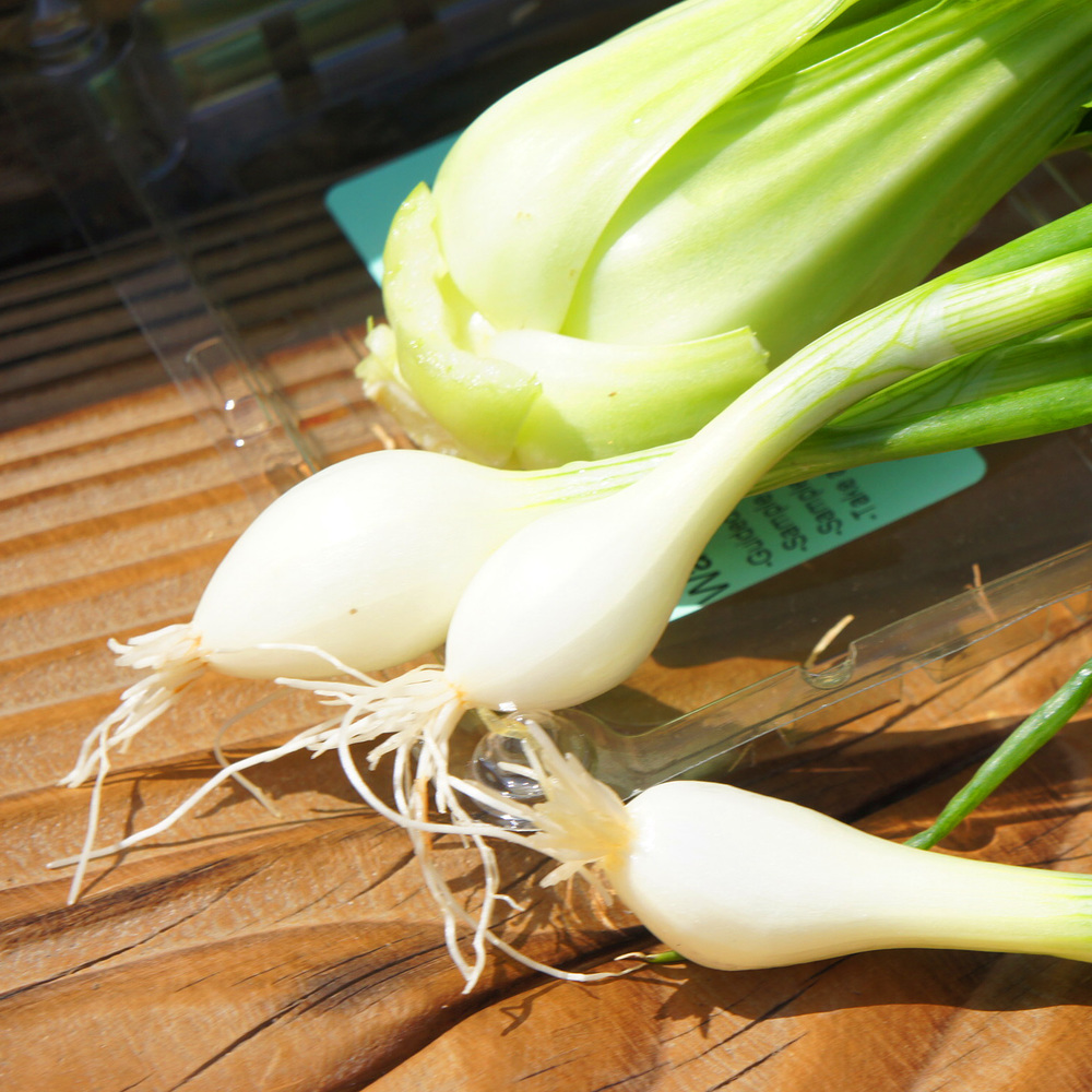Baby Maui Onions – These onions are very sweet.  You can cut the tops up and put them in salads, soups, salsa, and tacos.  Cut the bulbs up and sauté them to eat with other foods. Roast or grill them whole until they get caramelized and they make a great side dish.