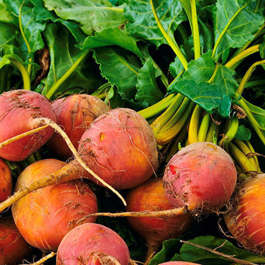 Golden Beets  -  It is made up of both an edible root and edible leaves.  Beet greens are actually more nutritious than the beets, containing twice the potassium and areexceptionally high in beta carotene and folic acid. Beets have the highest sugar content of any vegetable. Cook these just as you would a red beets. The golden beet is so eye catching it makes a great colorful addition to your meal.
