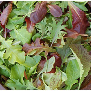 Mild Mesclun Mix -  A custom mix of young leafy greens and lettuces. Includes international ingredients such as Kyona Mizuna, Black Summer Pac Choi, Tatsoi, Red Russian Kale, Red Sails, Saladbowl and Rouge d'Hiver. Because these leaves are young they are also very mild in flavor and tender. When dressing these greens, simple is best. Just add a dash of your favorite vinegar or a drizzle of some really good olive oil, salt and pepper, and enjoy the flavor of these mild leaves.