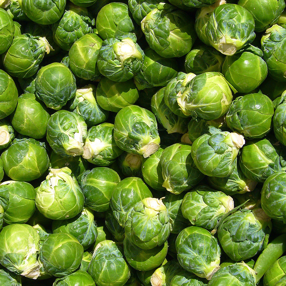 Brussels Sprouts - belong to the cabbage family. Boil, steam or roast them, whole or in smaller pieces, but whatever you do, avoid overcooking them! Overcooking releases the glucosinolate sinigrin, which has a sulfurous odor and a sulfuric, bitter taste. Generally boiling for 6 to 7 minutes is enough. You can even separate the leaves, toss them in olive oil and roast or fry them until crunchy! Not a fan of brussels sprouts? Try them with bacon or chorizo and then tell us what you think!