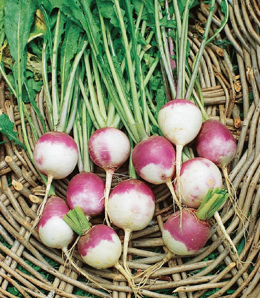 Turnips  - Similar to rutabagas, turnips can be hot and peppery in flavor. They can be steamed, boiled, or shredded and added to salads. Add to soups or stews for hearty dishes. The tops can be consumed as well and cooked similarly to other leafy greens.