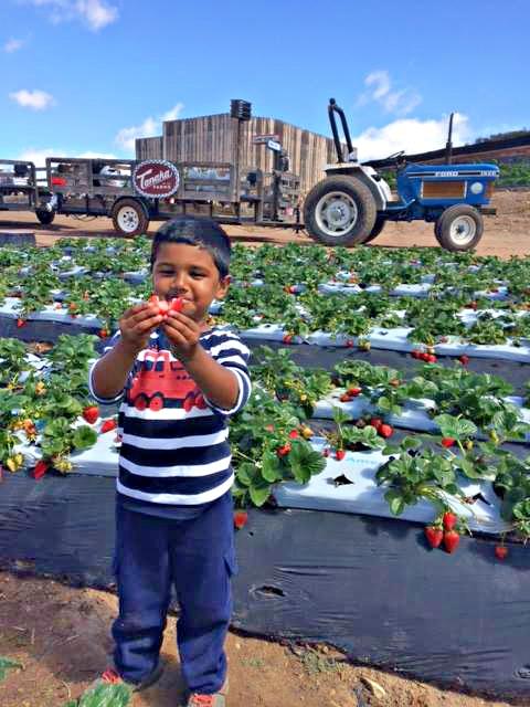 Little Boy with berry.jpg