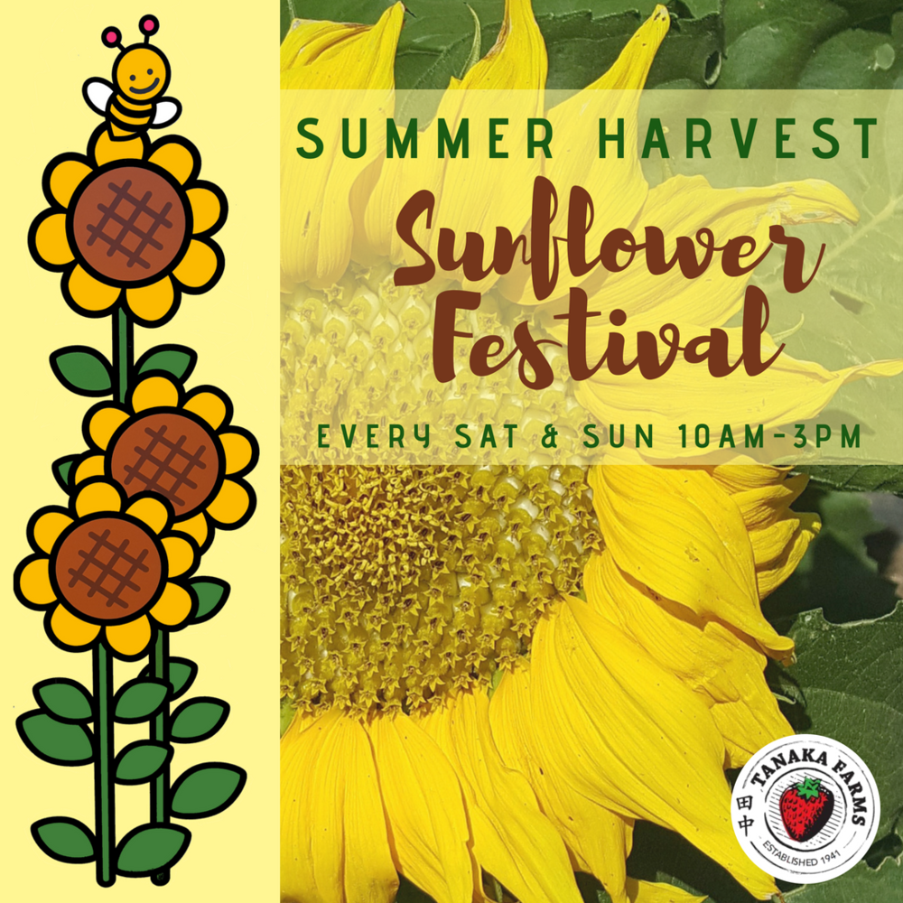 Sunflower Harvest Festival (1).png