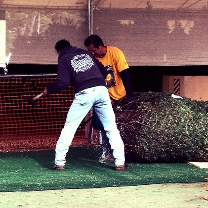 We will wrap your tree in netting.