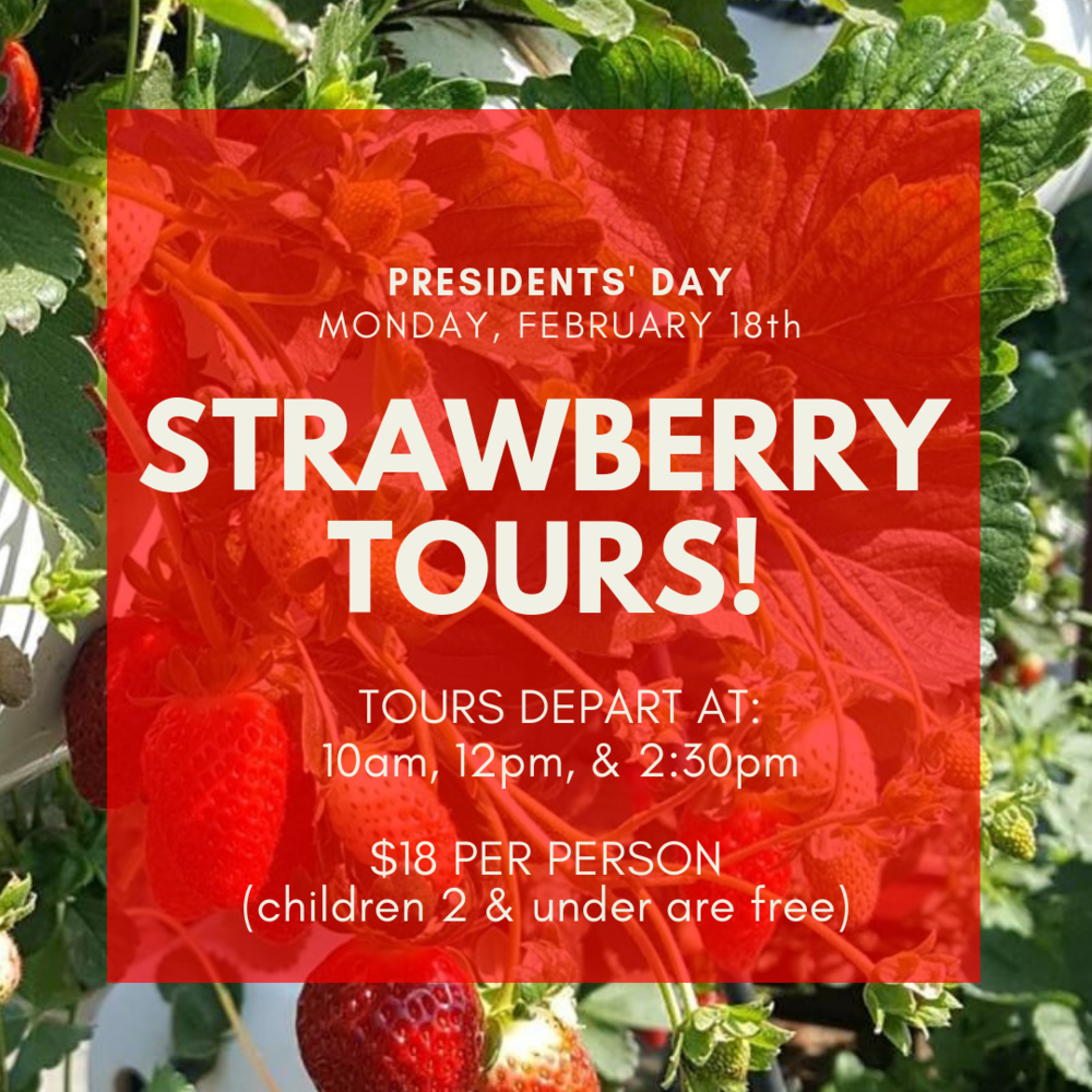STRAWBERRY TOURS!.png