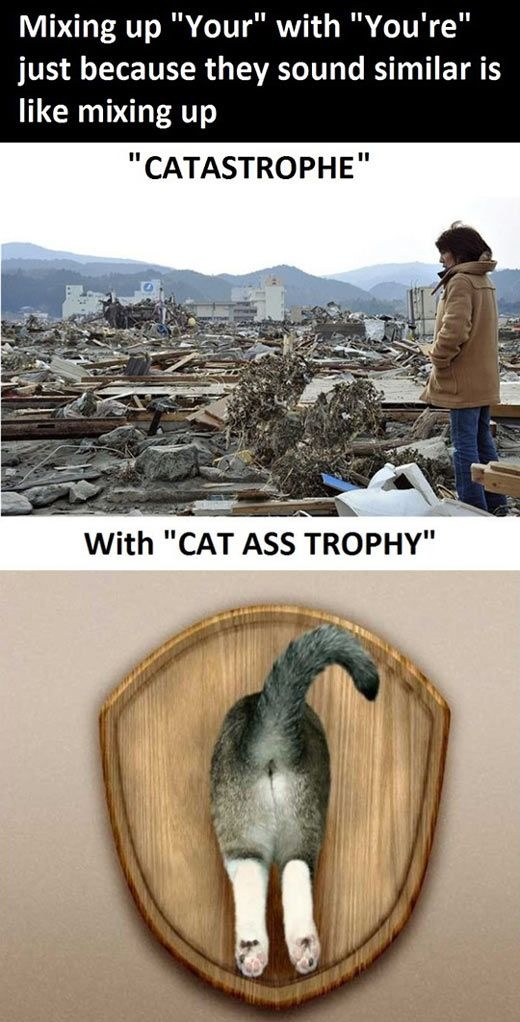 Catastrophe is not the same as cat ass trophy