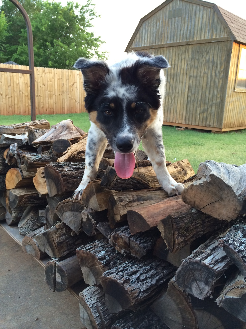 Winchester on the firewood