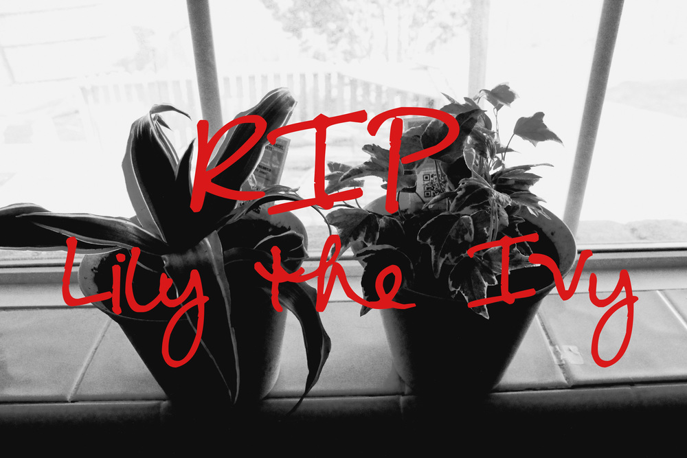 RIP Lily the Ivy