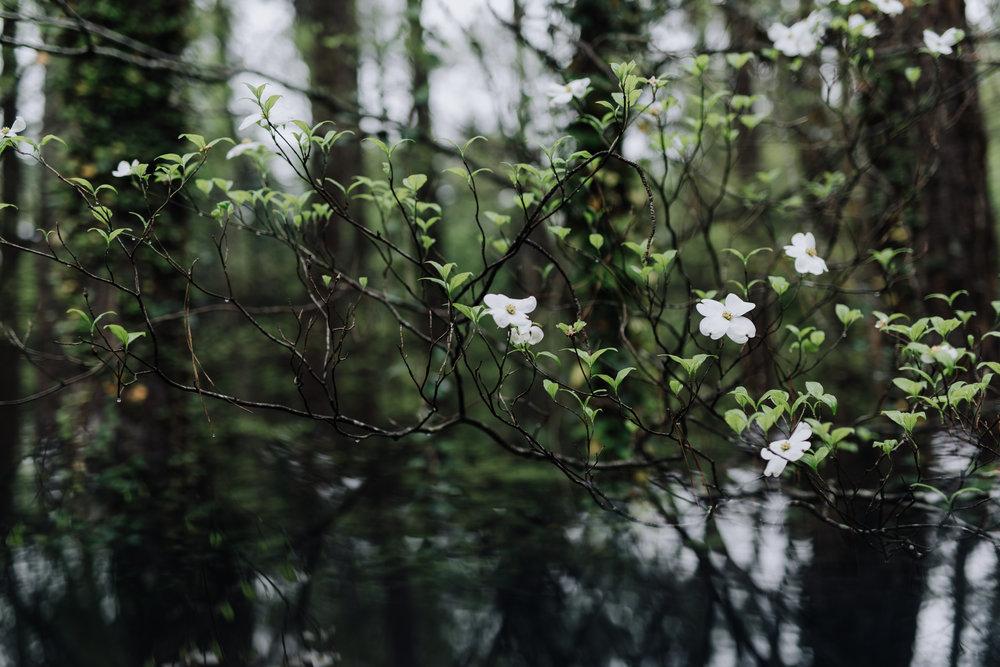 spring 2019-1392.jpg
