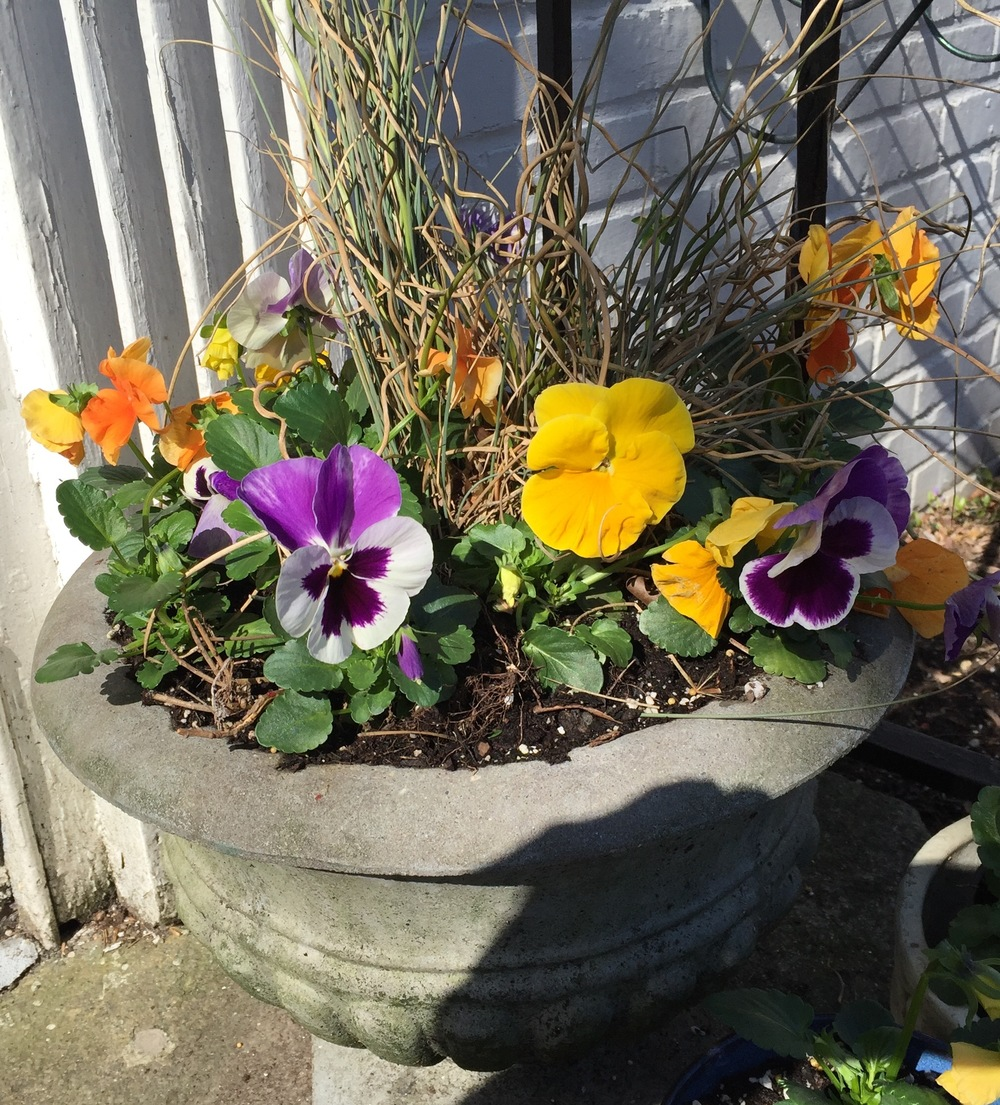 Here's my little spring fling that makes me smile- the pleasant face of pansies to greet me every time I come home.