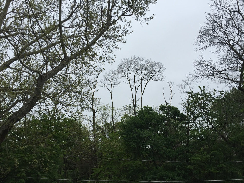 Definitely no sunshine today.