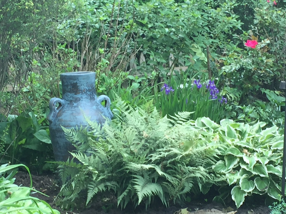 Part of my backyard garden.  The blue vase was a find on a day excursion with the family.  Have loved the blue hue against the background of various ferns, hostas and iris.
