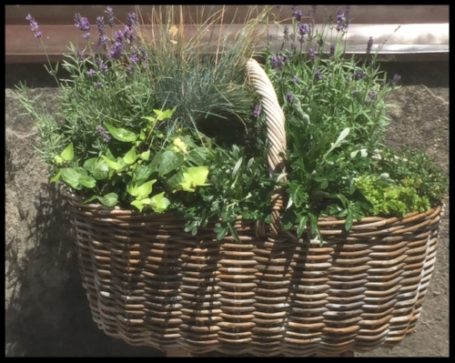 Grow your own herbs.    (Basket was outside a cottage in an Austrian village.)