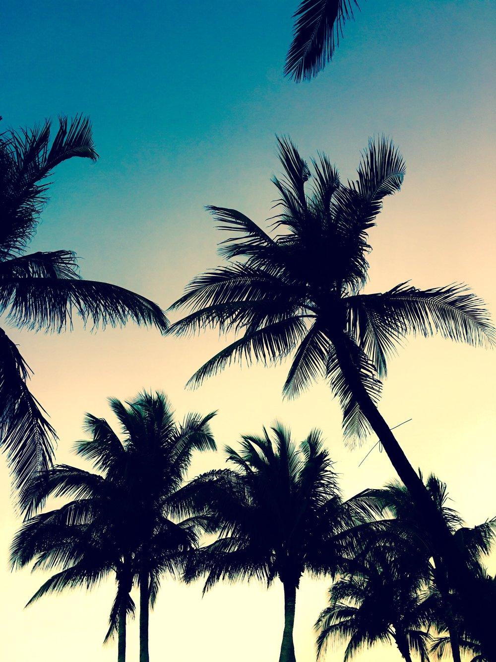 Miami Palm Trees - photography