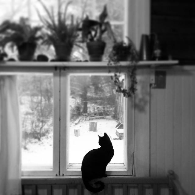 #cat #window #home