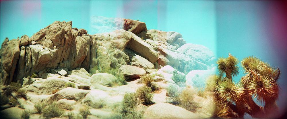 """""""JTree Rocks"""""""