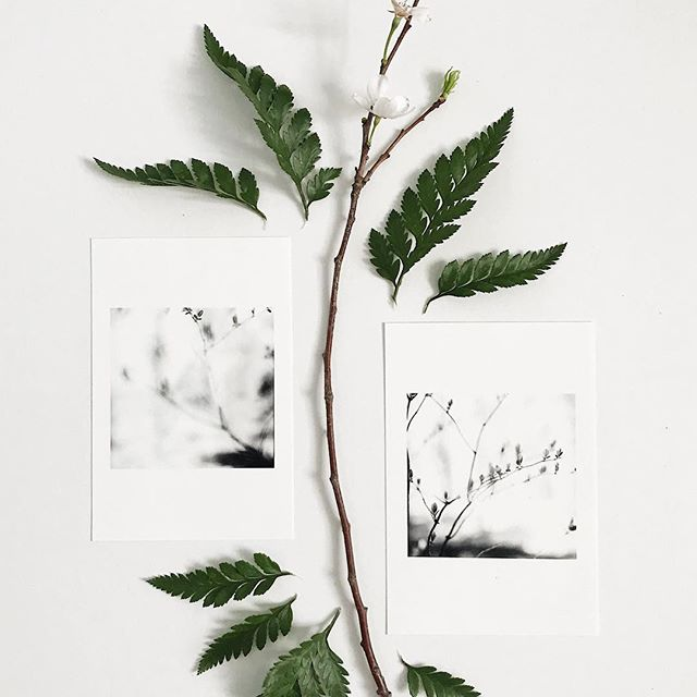 Inspiration is never too far. . . . . #smallbusinessowner #mamiyac330 #fineart #togetherjournal #austintx #grandrapidsmi #flashesofdelight #flatlay #nature #fern