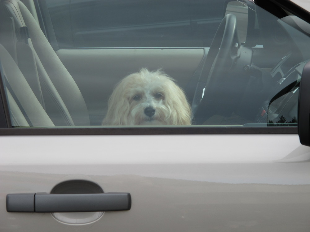 Taken in the Vashon Thriftway parking lot -- tired of waiting!