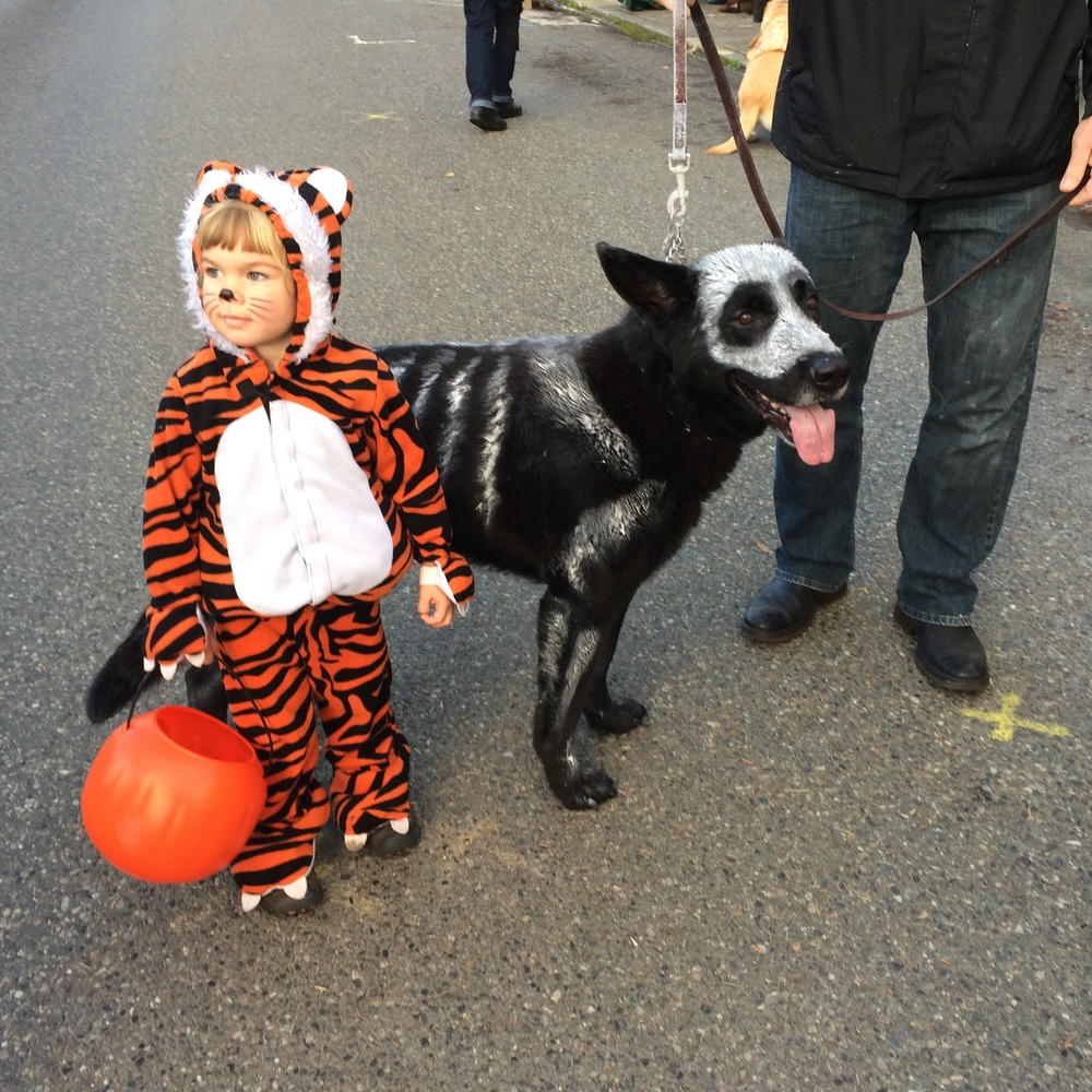 A little face paint and a willing shepherd to protect his little tiger.. ..