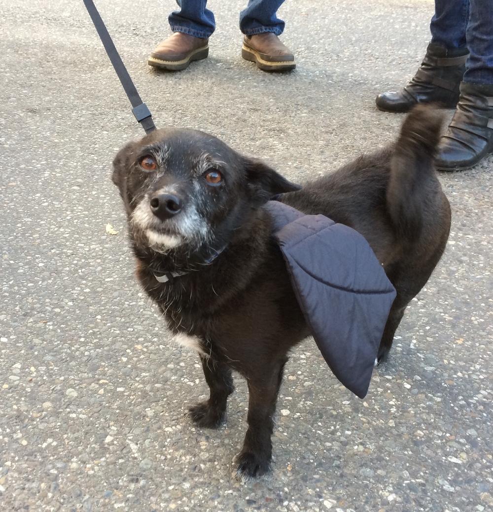 Batdog!