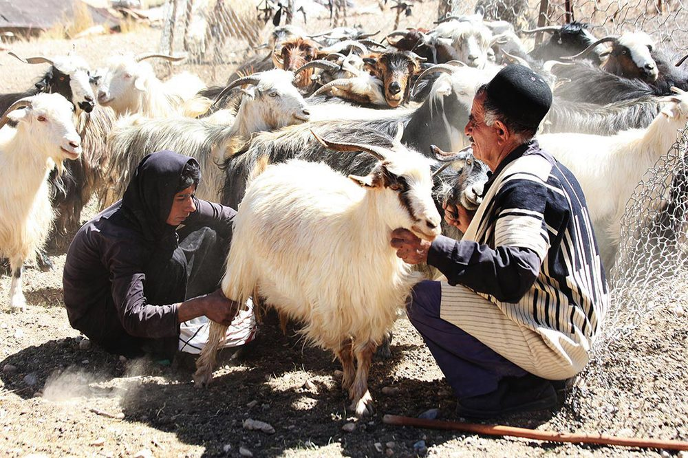 A small percentage of Bakhtiari are still nomadic pastoralists, migrating between summer quarters and winter quarters | Khoorang | IRAN