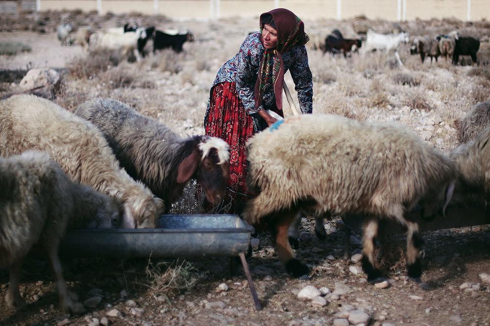 The nomadic women look very different from Iranian women as they wear very colorful clothing but no makeup  /   Habillées avec des couleurs vives, les femmes nomades contrastent avec les Iraniennes et d'autant plus que, contrairement à celles-ci, elles ne se maquillent jamais     | IRAN