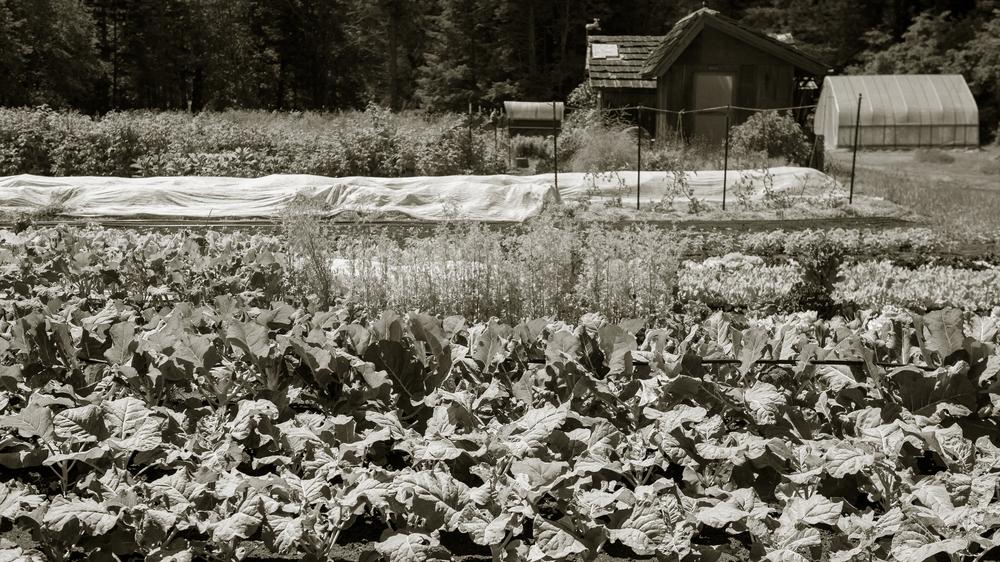 Farm Photo.jpg