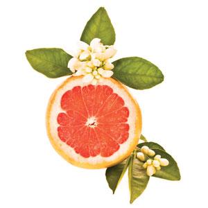 grapefruitweb.jpg