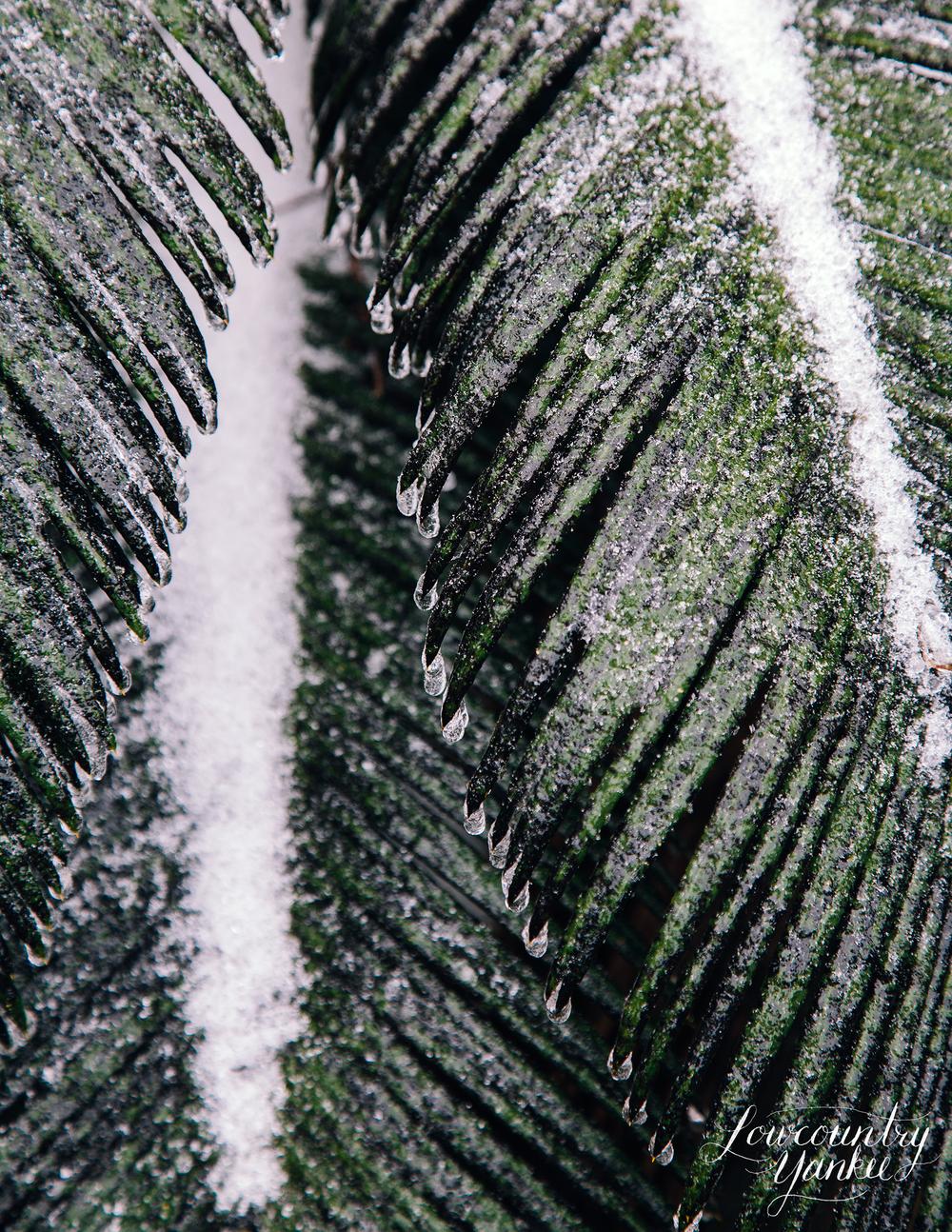palmfronddark.jpg