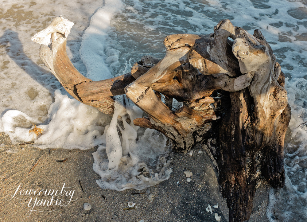 Nature creating driftwood sculptures.